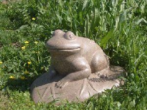 Лягушка-Полая